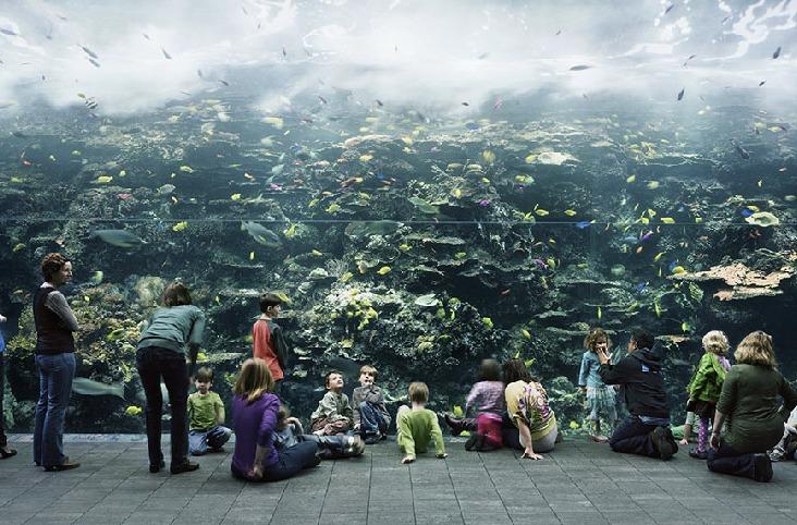 Aquarium, Atlanta Georgia, 2013