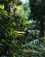 Paradise 1, Daintree, Australia (1998).