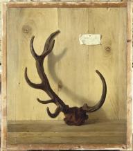 Jean-Baptiste Oudry, Bois bizarre d'un cerf pris par le Roi, dans la forêt de Compiègne le 10 juillet 1749, 1749, Fontainebleau, Musée du Château de Fontainebleau