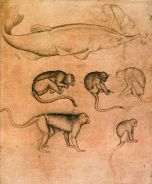 493px-Pisanello_-_Sturgeon_and_Six_Monkeys_-_WGA17879