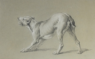Jean-Baptiste Oudry, Study of Dog, Jean-Baptiste Oudry, c. 1730, Private Collection