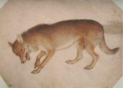 Pisanello_-_Codex_Vallardi_2424