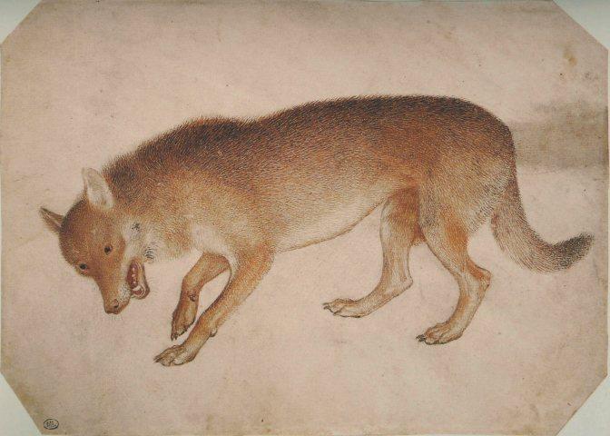 DISEGNO II: Pisanello