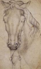 pisanello_-_study_of_the_head_of_a_horse_-_wga178541363653313625