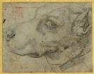 Annibale Carracci, Head of a Dog in Profile, c. 1590,