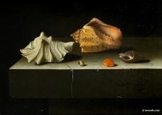 Adriaen Coorte, Five Shells, 1697, Paris, Musée du Louvre.